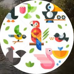 1-birdwatching